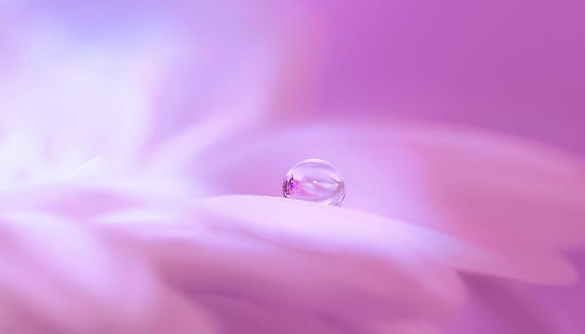 露出補正_ハイキーで撮影した花